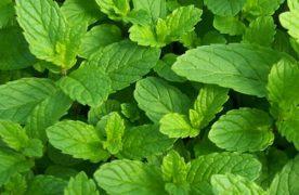 6 loại rau thơm và công dụng chữa bệnh của chúng